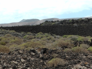 Picture of the lava fields near Orzola